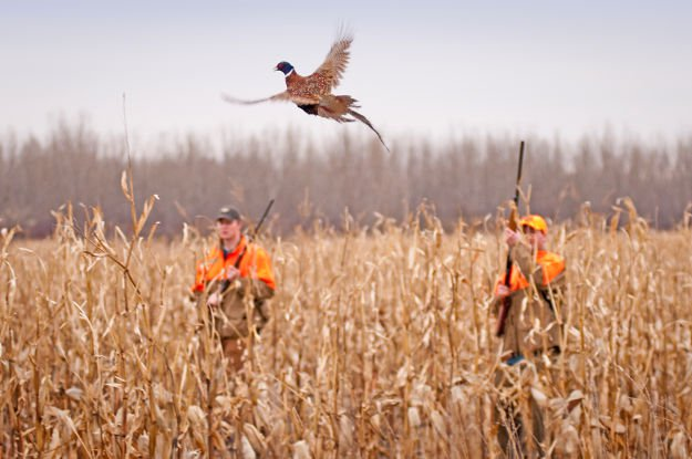 Know their routines   Practical Quail Hunting Tips Every Hunter Should Follow