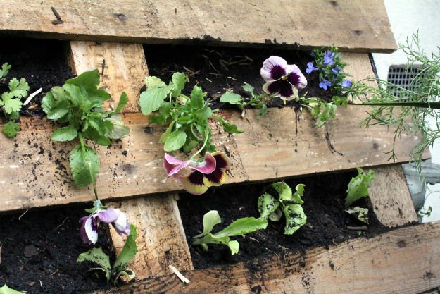 wooden pallet | Pallet Gardening - 2 Great Layouts For Your Garden