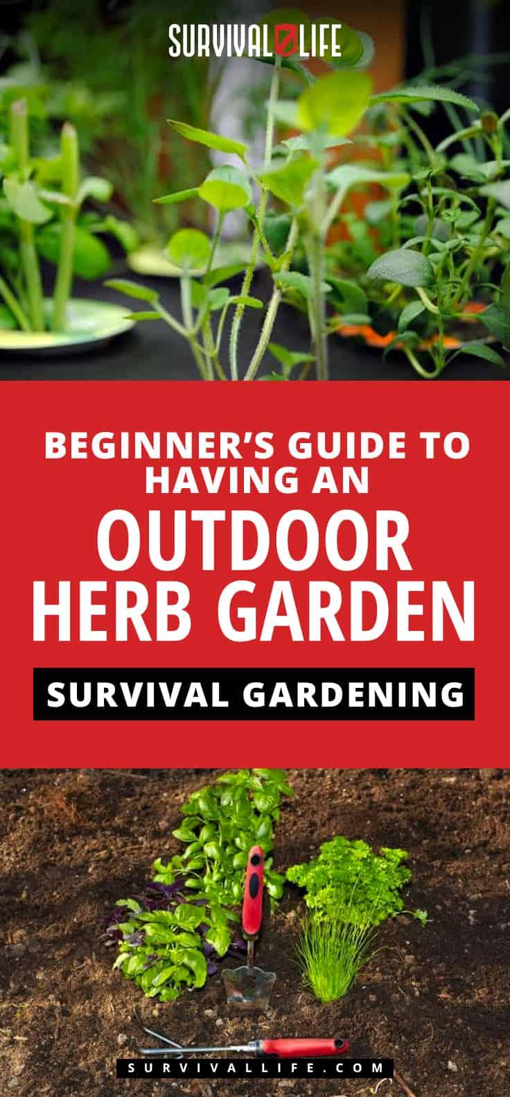 Outdoor Herb Garden | A Beginner's Guide To Survival Gardening | https://survivallife.com/survival-gardening-outdoor-herb-garden/