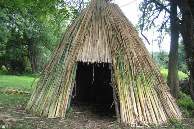Shelters | Cattails Survival Uses