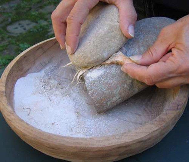 Flour | Cattails Survival Uses