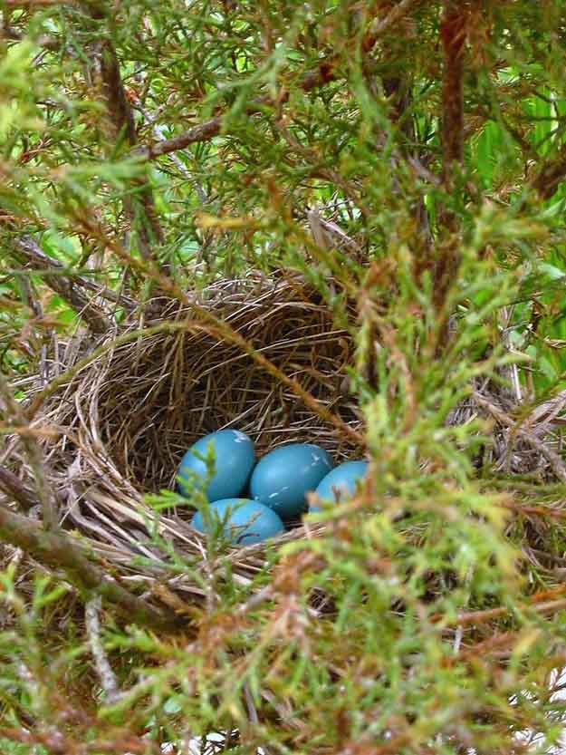 In A Real Birds Nest | 50 Easter Egg Hiding Spots
