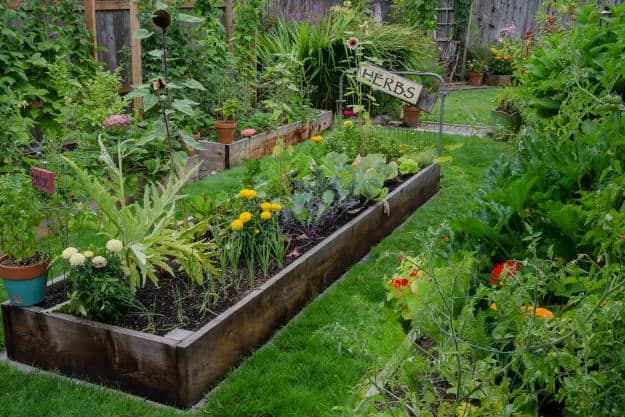 herb garden | Beginner's Guide To Having an Outdoor Herb Garden | Survival Gardening