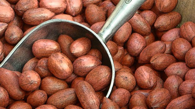 Going Nuts: A Rough and Dirty Field Guide To Foraging For Food pecans