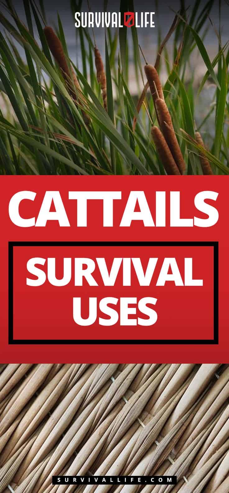 Pinterest Placard   Cattails Survival Uses