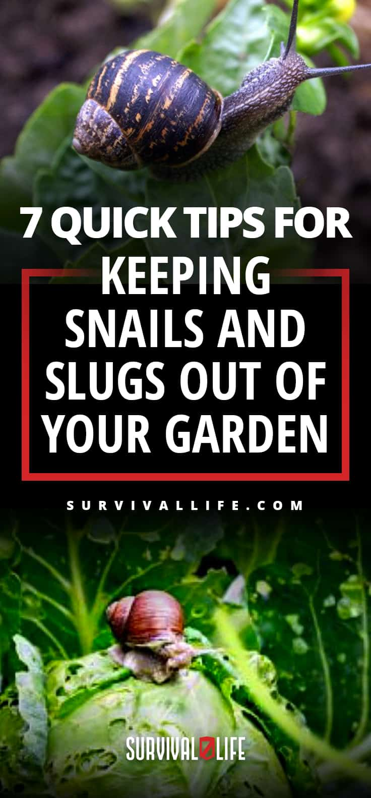 Quick Tips For Keeping Snails And Slugs Out Of Your Garden | Survival Gardening | https://survivallife.com/snails-and-slugs-away-survival-gardening/