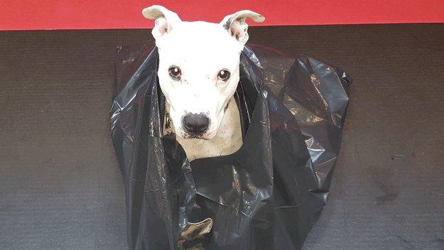 Contractor's Trash Bag