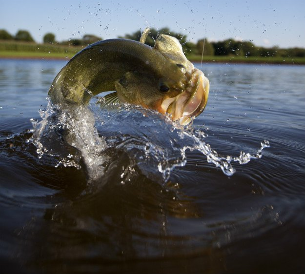 Bass Fishing for Beginners | Tips for Fishing 101
