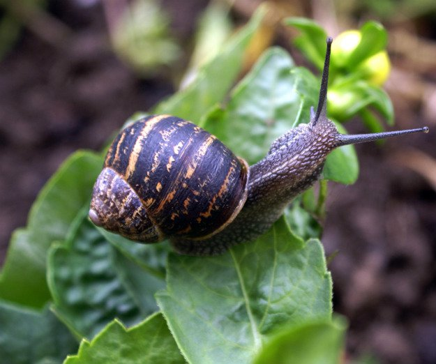 Keeping The Snails And Slugs Away | Survival Gardening