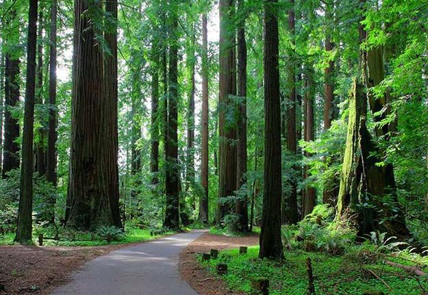 """Camping in California 