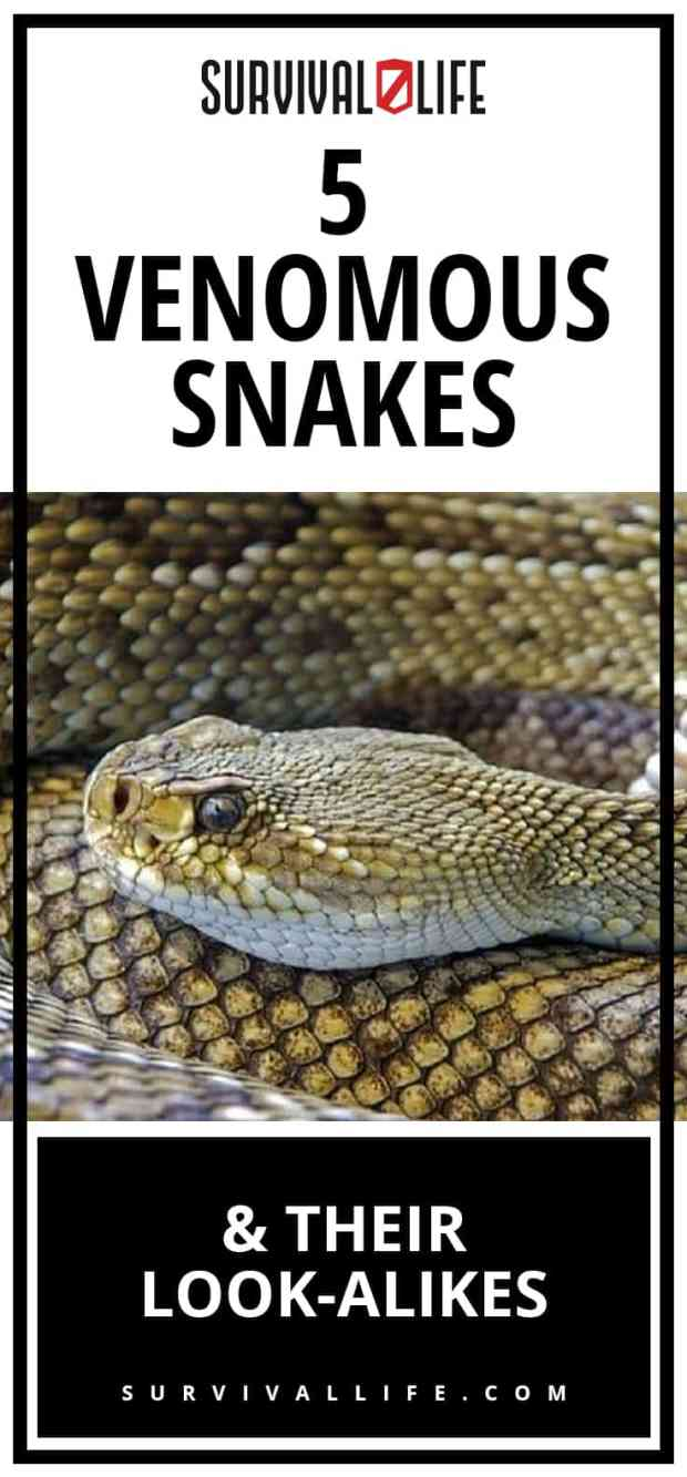 Venomous Snakes and Their Look-Alikes| https://survivallife.com/venomous-snakes-look-alikes/
