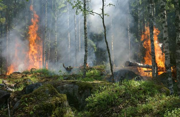 Forest Fire | Wilderness Survival | Ways You Can Be Injured In The Wild