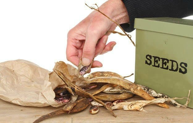 Prepare survival seeds for storage | Disaster Proof Survival Seeds And How To Store Them