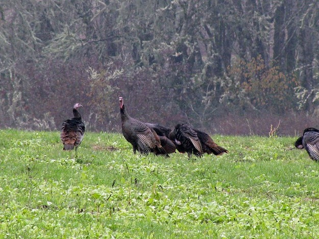 4 Best Caliber Options for Turkey Hunting