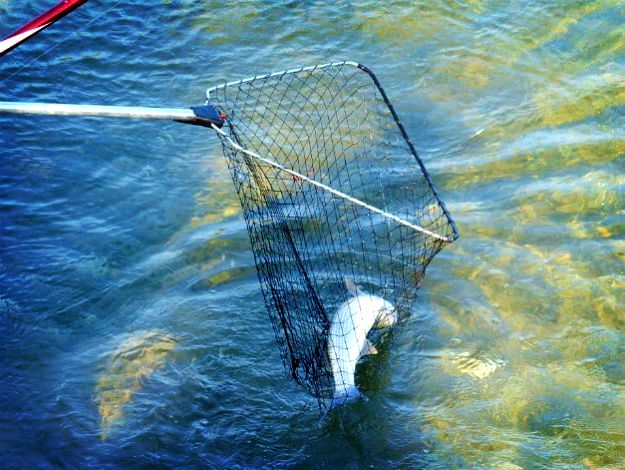 Fishing Nets | Survival Fishing | Unconventional Methods To Catch Fish