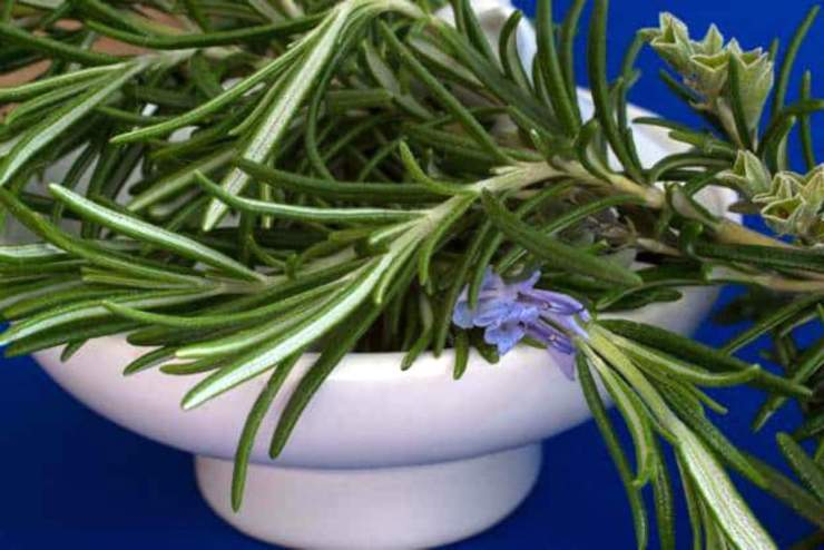 Rosemary in a bowl | Adaptogenic Herbs to Relieve Stress in the Wilderness
