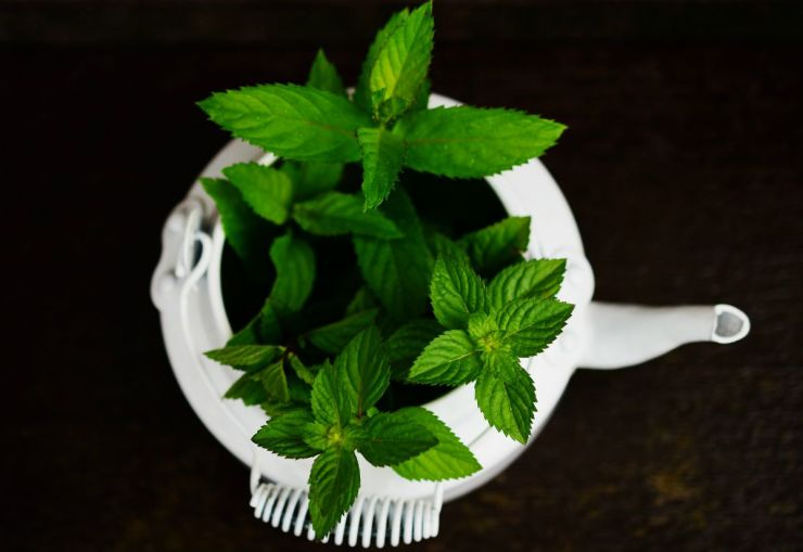 Peppermint herbs | Home Remedies For Toothache Pain Relief