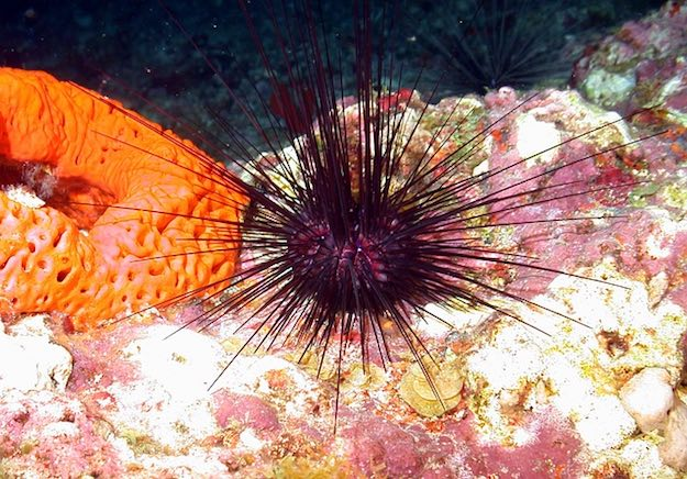 Sea Urchin | Beach Animals To Watch Out For When On Vacation