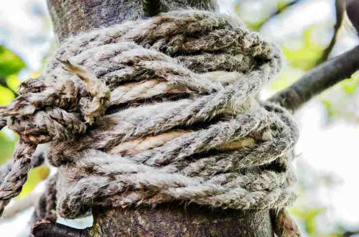 Rope in the tree | DIY Paracord Hammock Chair