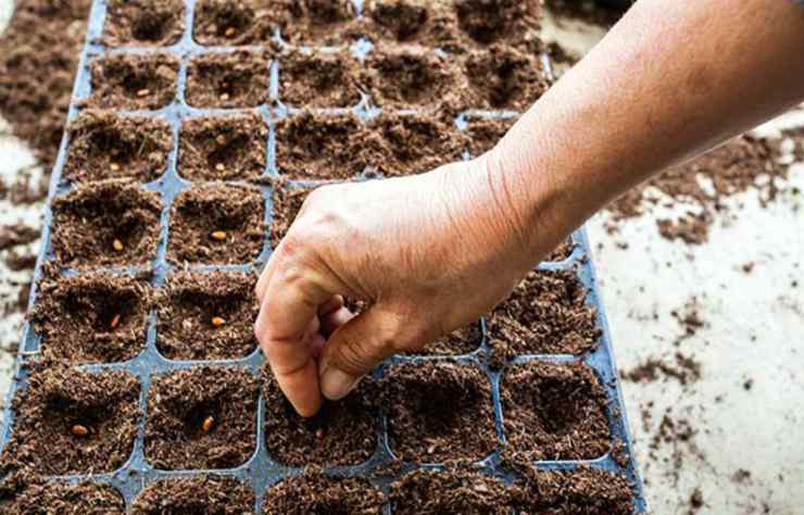 Planting seeds in small tray | Important Trades for Survival