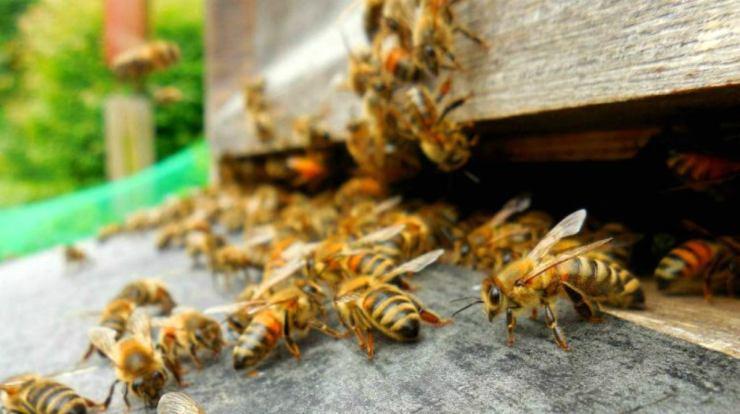 Swarn of bees   DIY Seedling Greenhouse Ideas