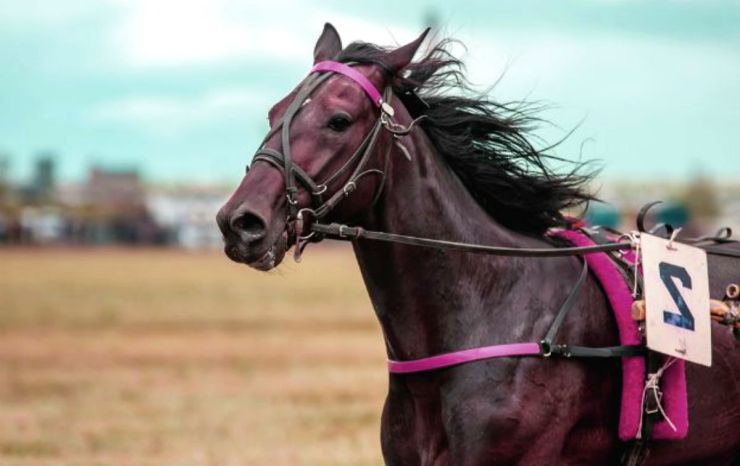 Running horse in the field | Vicks Vaporub | Surprising Reasons To Keep It In Your Cache