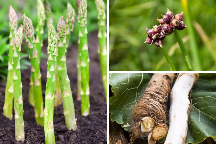Perennials | Best Plants for your Survival Garden