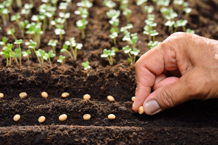 Succession Planting   Small Garden Ideas and Tips   Small-Space Gardening