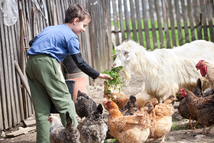 Little Farm Boy Feeding the Chickens and the Goat | Why You Should Have A Backyard Farm