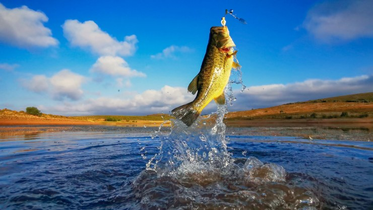 Be Ready for the Jump | Bass Fishing Tips