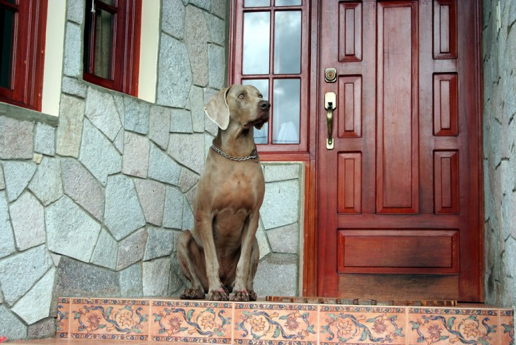 Dogs| Home Defense Plans And Deterrents That Work