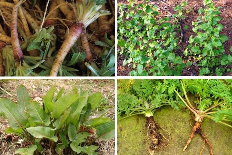 Roots | Survival Foods - Edible Plant Fibers