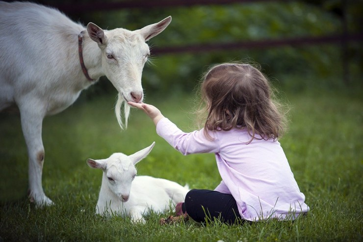 They're Great Companions | Goats Are Underrated: Reasons You Need Goats