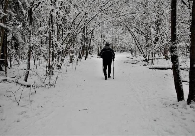 Nordic walking. An elderly man with Nordic walking sticks walks along a path in a snowy winter forest | Walking on Ice Walking Sticks