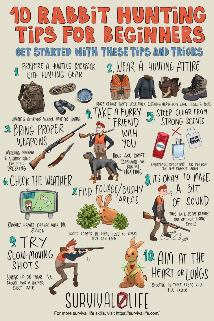 10 Rabbit Hunting Tips For Beginners