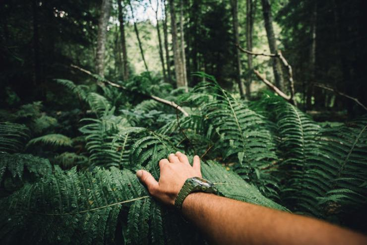 Close up of explorer male hand in green rainy forest   tree identification by picture