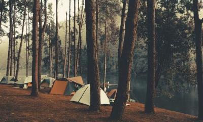 Camping and tent under the pine forest | How to Book a Campsite from Parks to RVs to Backyards | Featured