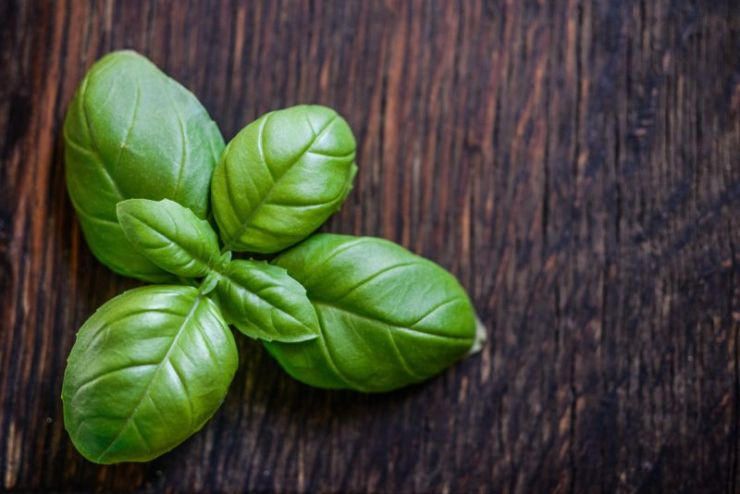 Green foliage basil | Mosquito repellent plants