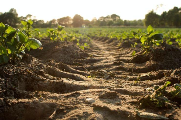 Planted crops | Gardening