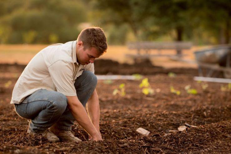 Trenches | Gardening