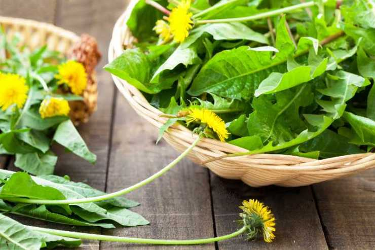 dandelion leaves and flowers-Common Weeds