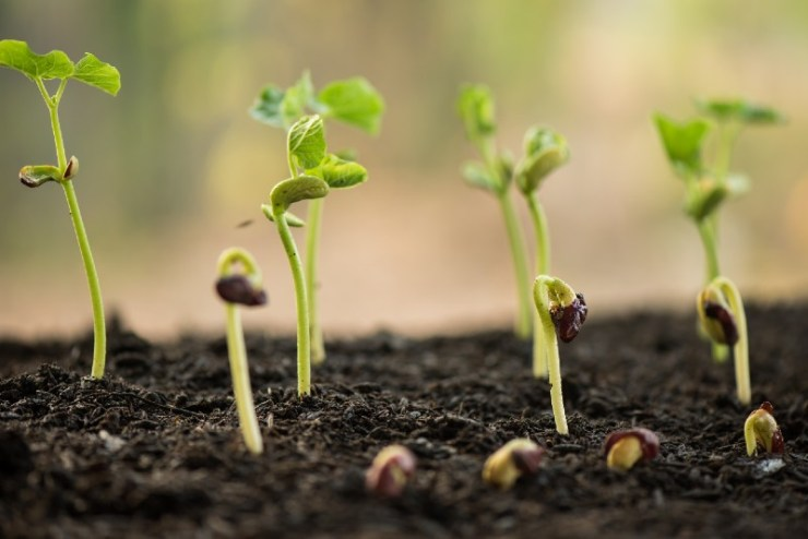 plant growing in morning light green nature bokeh background, new life, business financial progress cultivation-seed starting