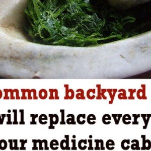 Herbal Remedy - The Only Tree Every Prepper Should Grow in His Own Backyard