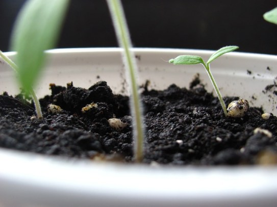 sprout-430417_640