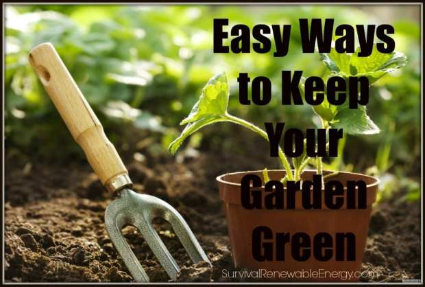Easy Ways to Keep Your Garden Green