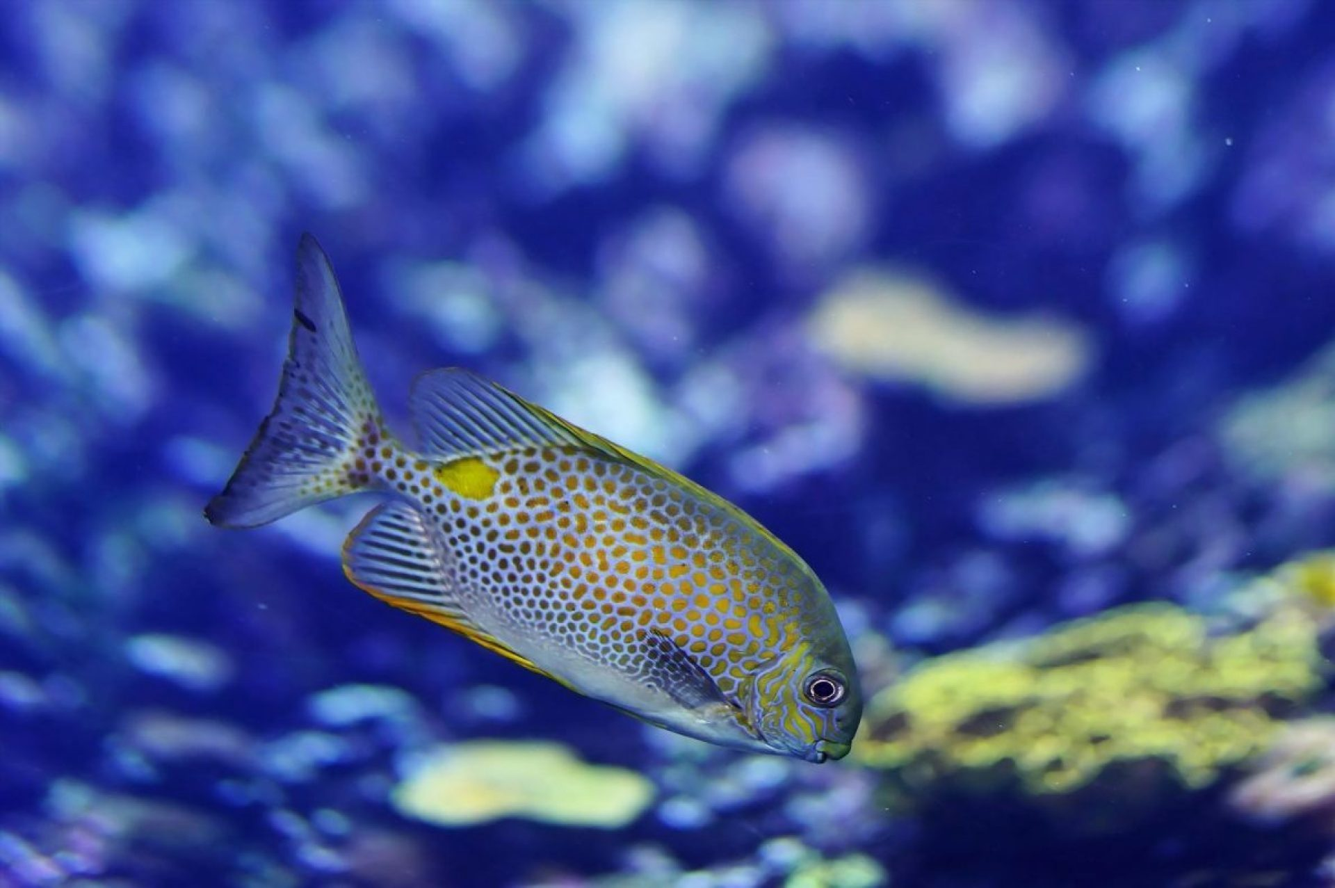 fish-1319830_1920