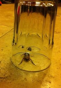 Cockroach found in Best Western Plus Meridian Inn and Suites
