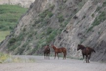 These horses stood right in the roadway.