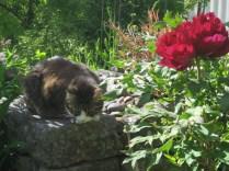 Mio och buskpionen