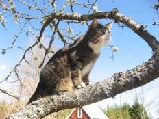 Högt uppe i körsbärsträdet